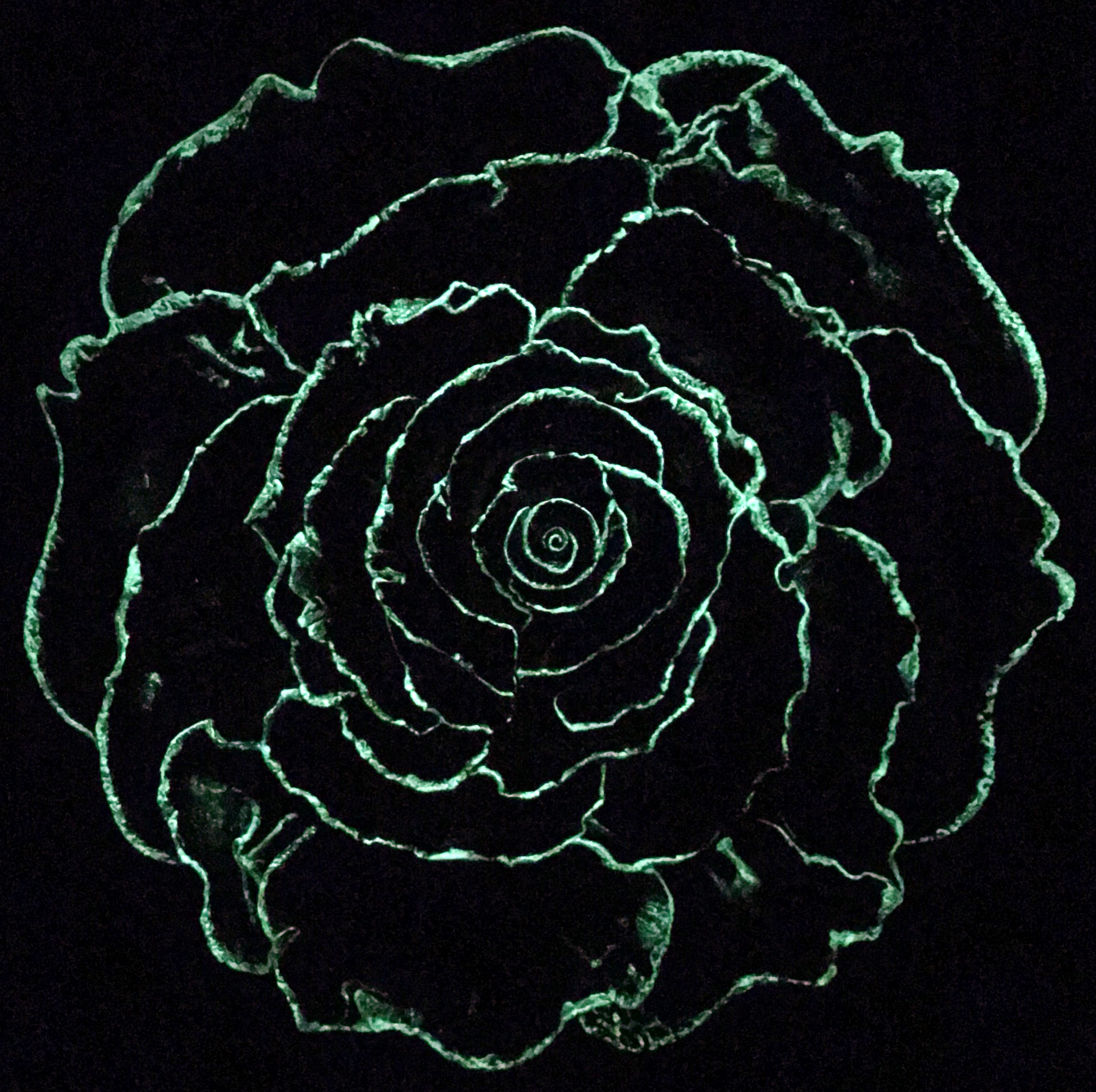 The Corals want to be Roses...[Glows in the Dark]